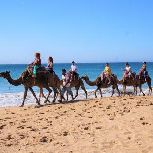 Activity- Actividades – Aktivitäten – activités – działania – aktivity - faaliyetler – activiteiten - attività Marocco