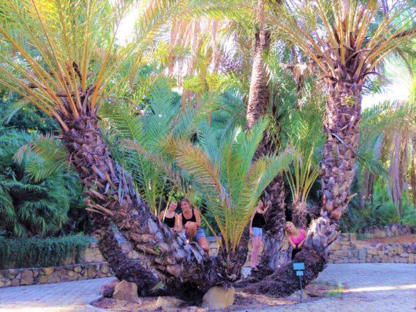 Activity- Actividades – Aktivitäten – activités – działania – aktivity - faaliyetler – activiteiten - attività botanical garden